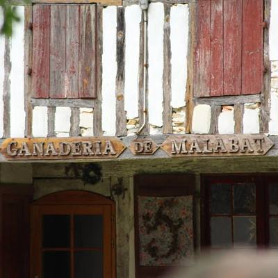 La Ganaderia de Malabat dans les Landes
