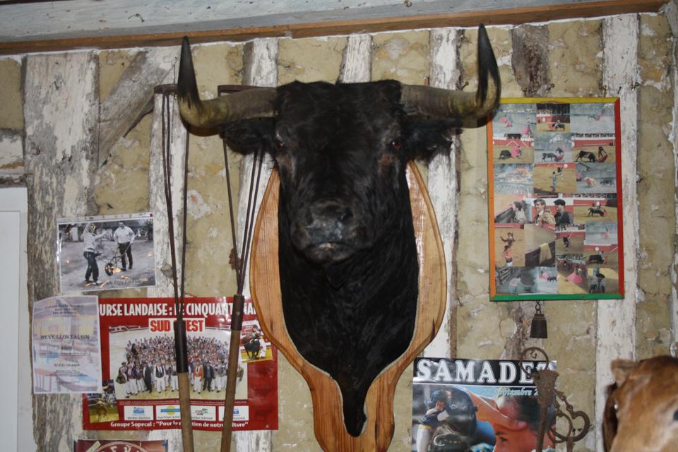 Ganaderia de Malabat, élevage de taureaux dans les Landes